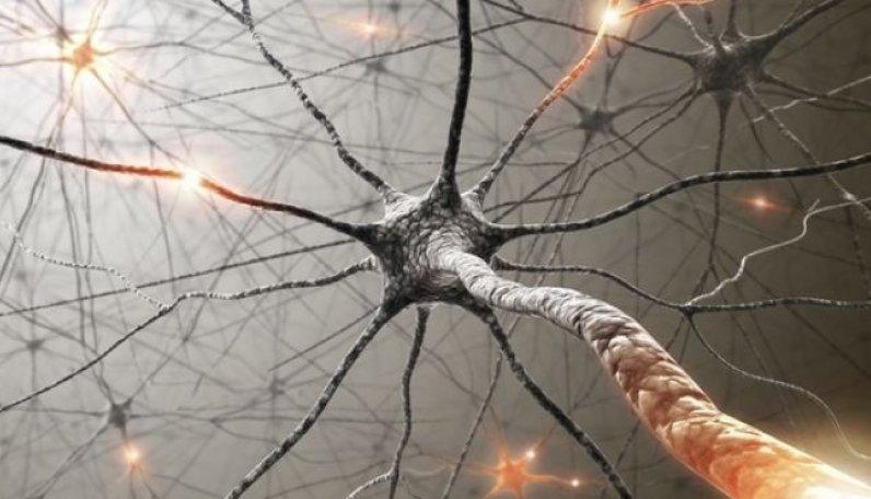 Motor Nöron Nedir?